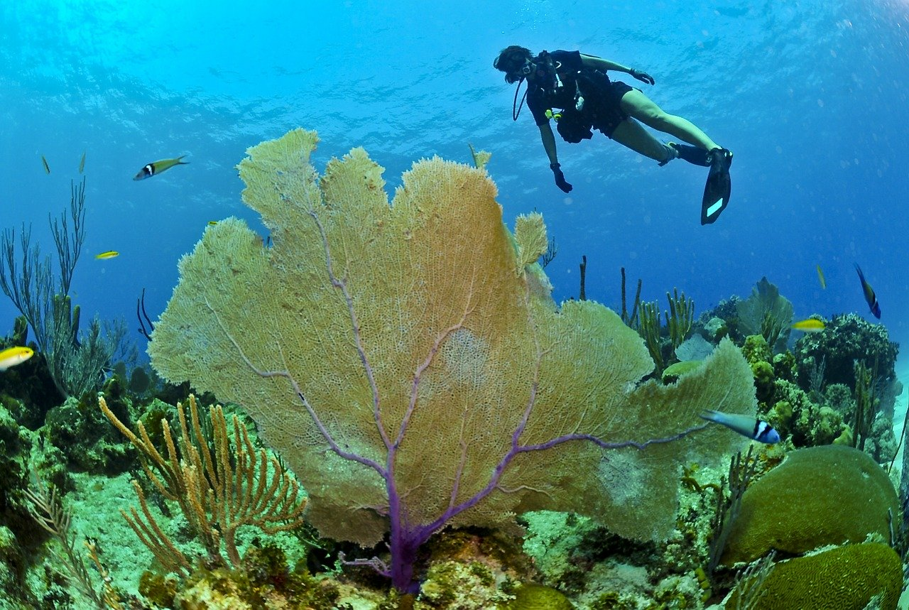 A Free Dive Record from the Maldives