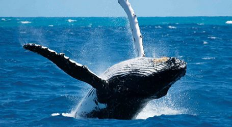 Whale Watching Season Begins – Trincomalee in May