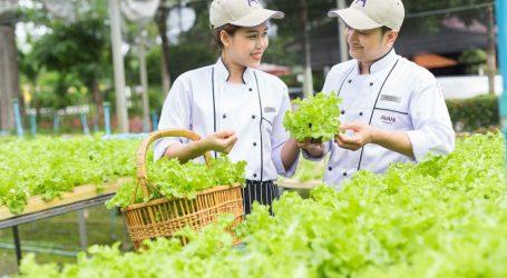 Avani Pattaya Resort Shares DIY Home Farming Tips – A Healthy & Safe Option