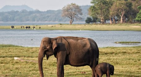 Sri Lanka Wildlife Parks: Post-COVID-19 Operations a New Start? – Venturing Back into the Wilds