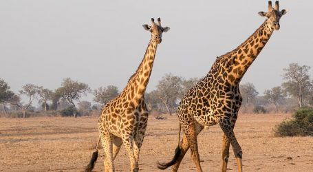 A new website that guarantees safari sightings launched – Making your safari plans is now easy