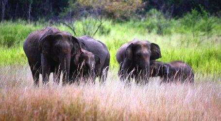 Adapting to new normal, Sri Lanka Tourism goes virtual to promote 'Wildlife' – Taking Sri Lanka to the World