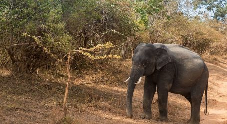 Sri Lanka Initiates Couch Safari – Sri Lanka goes virtual