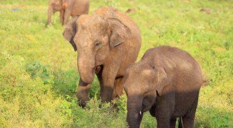 Sri Lanka to offer live streams from wildlife parks