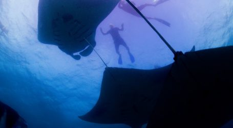 Manta Ray Conservation in the Maldives Highlighted on CNN's Call to Earth