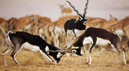 Sir Bani Yas Listed as a Key Place for Wildlife Encounters – Amazing Animal Experiences