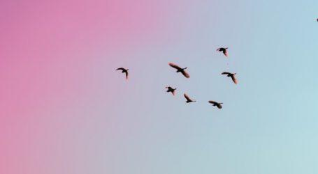 Autumnal Equinox in September – Migrating Birds Begin Journey to the Caribbean